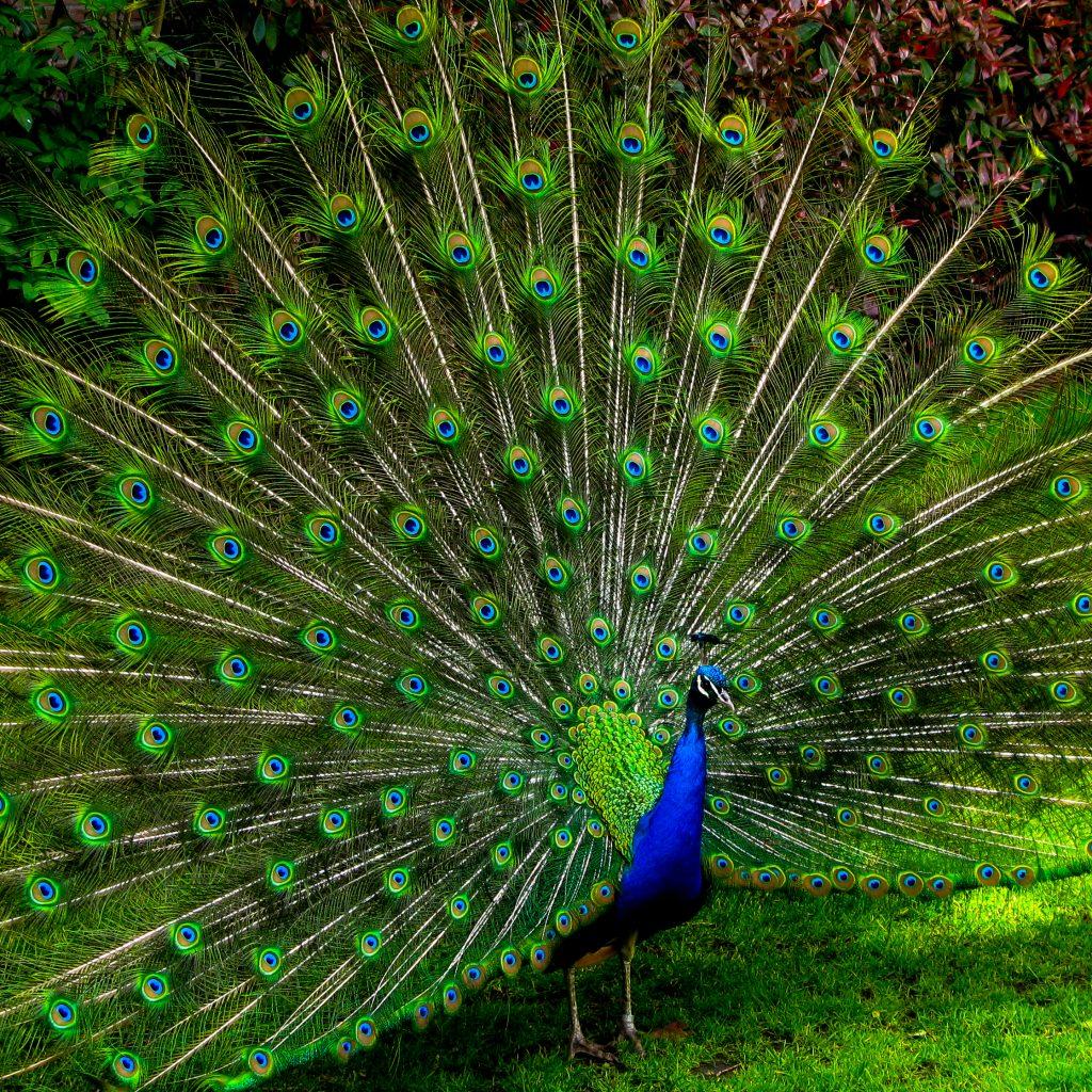 eraani peacock be you and shine bright